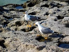 gaivotas na praia perto do mar foto