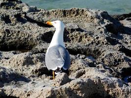 gaivota na praia perto do mar foto