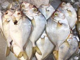 peixe congelado com gelo picado à venda na bandeja do mercado de frutos do mar frescos foto