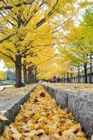 pessoas andando na passarela coberta pelas folhas amarelas da raiz do ginkgo