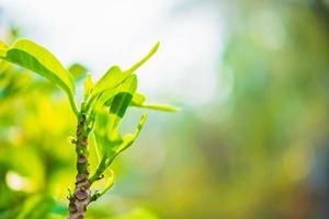 planta verde vibrante