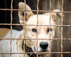 cachorro em uma gaiola foto