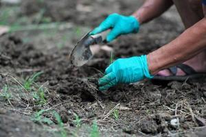 movimento borrou as mãos do jardineiro removendo ervas daninhas do solo foto