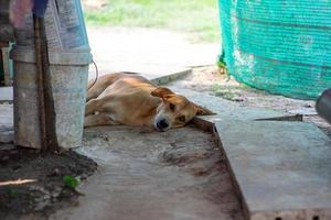 retrato de um cachorro deitado no chão