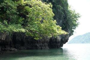 closeup ramos de árvore crescem em um penhasco rochoso na ilha com fundo de paisagem foto