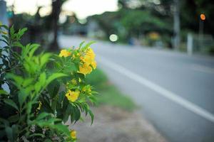 closeup flor flores amarelas com luz desfocada da bicicleta na estrada rural no fundo