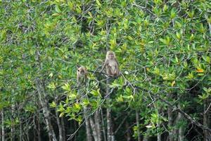 foco seletivo em macacos sentados nos galhos de árvores de mangue com selva borrada no fundo
