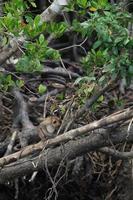 foco seletivo em macacos sentados nas raízes de árvores de mangue com selva borrada no fundo