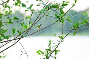 passarinho segurando um galho de árvore com fundo de céu claro foto