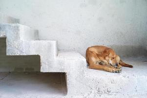retrato triste sem-teto marrom cachorro senta-se no chão de cimento da casa em construção.