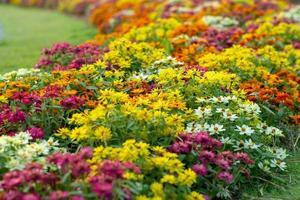 paisagem de flores coloridas no jardim foto