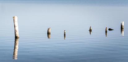 postes de madeira em águas calmas foto