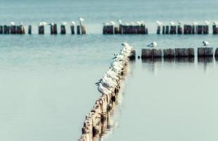 gaivota em postes de madeira foto