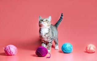 gato malhado com fio foto