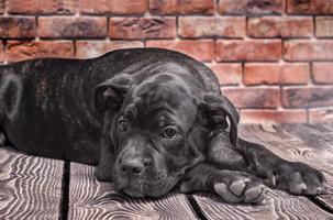 cachorro preto deitado no chão foto