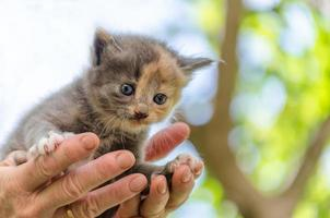 gatinho nas mãos foto