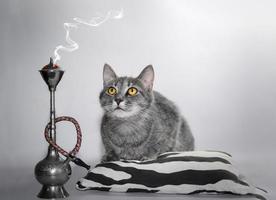 gato malhado prateado com olhos amarelos e narguilé foto