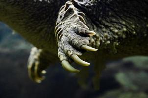 close-up de garras de tartaruga foto