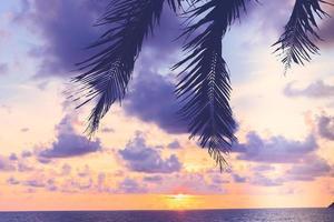 silhueta de uma palmeira