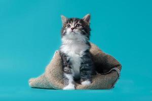 gatinho malhado com saco em um fundo turquesa foto