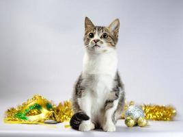 gatinho malhado com decoração mardi gras foto