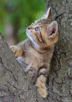 gatinho subindo em uma árvore foto