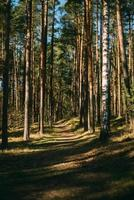 floresta na sombra foto