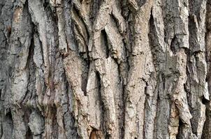 close-up de casca de árvore foto