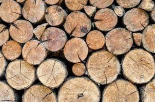 fundo de toras de madeira foto