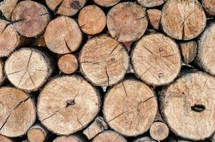 textura de toras de madeira foto