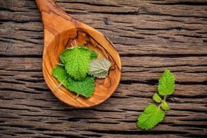 folhas de tintura de melissa de erva-cidreira fresca em uma colher preparada com camada plana sobre mesa de madeira surrada
