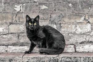 gato preto sentado na parede de tijolos foto