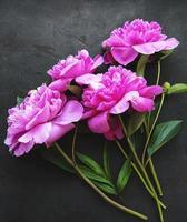 flores peônia em um fundo preto