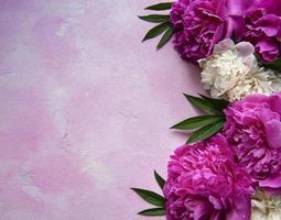 flores de peônia em um fundo rosa de concreto foto