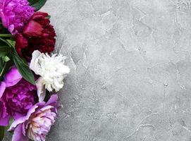 flores de peônia em um fundo cinza de concreto foto