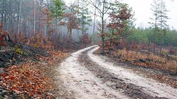 estrada em uma floresta de manhã nublada foto
