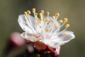 close-up de uma flor de flor branca foto