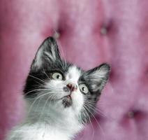 close-up de um gatinho preto e branco foto