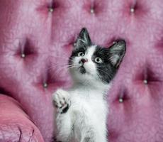gatinho preto e branco em uma cadeira foto