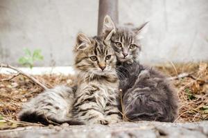 dois gatinhos malhados foto
