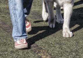 pessoa em sapatos vermelhos passeando com um cachorro foto