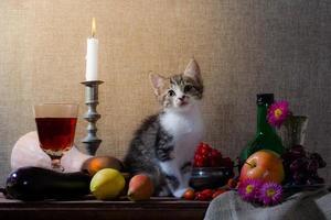 gatinho em cenário de natureza morta foto