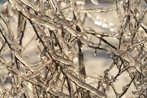 galhos e galhos de árvores cobertos por pingentes de gelo foto