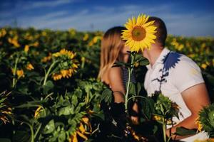 jovem casal apaixonado está se beijando em um campo de girassol. deslumbrante retrato sensual ao ar livre de jovem casal de moda elegante posando no verão em campo