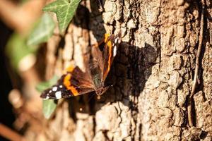 borboleta em um tronco de árvore