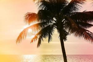 palmeira de coco vintage foto