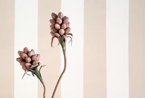 foto minimalista de uma planta de papel com uma parede listrada em tons pastéis ao fundo