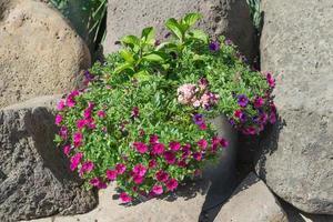 planta colorida um balde de alumínio ao lado de grandes pedras à luz do dia foto