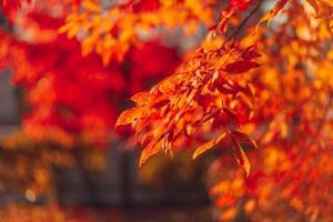 close-up de folhas vermelhas e laranjas em uma árvore