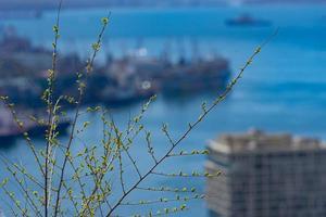 close-up de galhos com folhas verdes e um fundo desfocado de um porto e navios